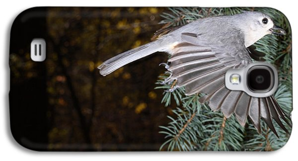 Tufted Titmouse Galaxy S4 Cases - Tufted Titmouse In Flight Galaxy S4 Case by Ted Kinsman