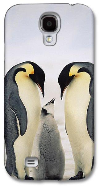 Three Chicks Galaxy S4 Cases - Emperor Penguin Aptenodytes Forsteri Galaxy S4 Case by Konrad Wothe