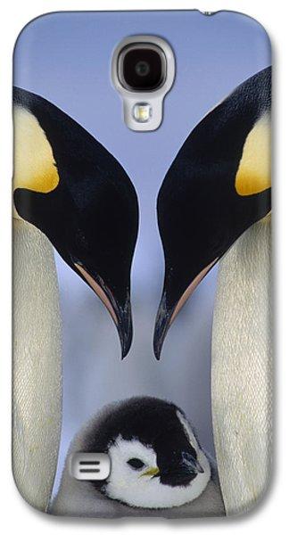 Three Chicks Galaxy S4 Cases - Emperor Penguin Family Galaxy S4 Case by Tui De Roy