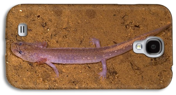 Ozark Blind Cave Salamander Galaxy S4 Case by Dante Fenolio