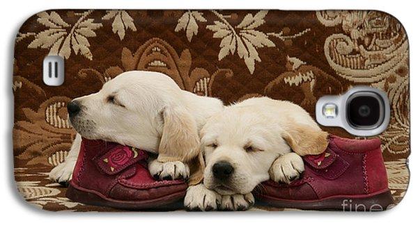 Mixed Labrador Retriever Galaxy S4 Cases - Goldidor Retriever Puppies Galaxy S4 Case by Jane Burton