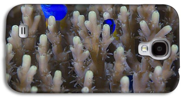 Demoiselles Galaxy S4 Cases - A Pair Of Yellowtail Damselfish Amongst Galaxy S4 Case by Steve Jones