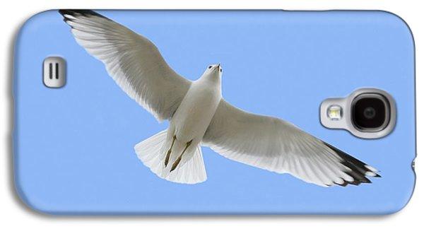 Coasting Galaxy S4 Cases - A Soaring Dove Galaxy S4 Case by Don Hammond