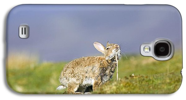 Chin Up Galaxy S4 Cases - Adult Rabbit Marking Scent Galaxy S4 Case by Duncan Shaw