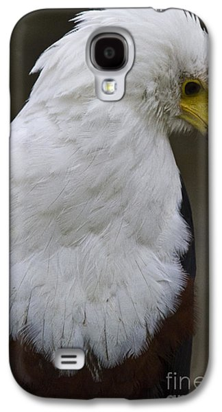 Animal Pyrography Galaxy S4 Cases - African sea eagle 5 Galaxy S4 Case by Heiko Koehrer-Wagner