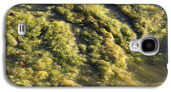 Alga Galaxy S4 Cases - Algae Bloom In A Pond Galaxy S4 Case by Photo Researchers, Inc.