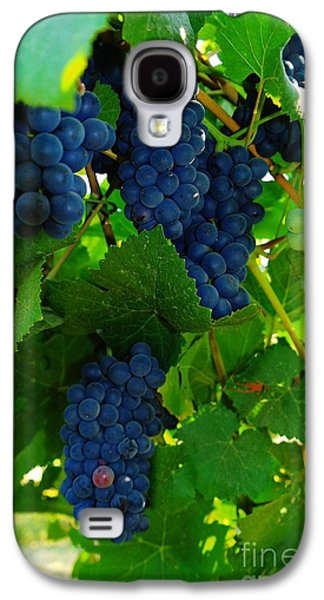 Vintner Galaxy S4 Cases - Almost Ready For Harvest  Galaxy S4 Case by Jeff  Swan