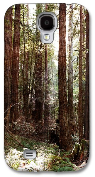 Santa Cruz Art Galaxy S4 Cases - Ancient Redwoods and Ferns Galaxy S4 Case by Laura Iverson