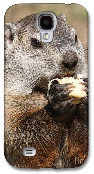 Animal - Woodchuck - Eating Galaxy S4 Case by Paul Ward