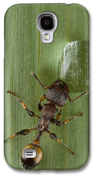 New Britain Galaxy S4 Cases - Ant Drinking From Water Droplet Papua Galaxy S4 Case by Piotr Naskrecki