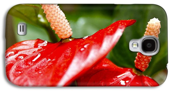 Epiphyte Galaxy S4 Cases - Anthurium in Red Galaxy S4 Case by Karon Melillo DeVega
