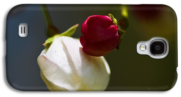 Bright Colors Glass Art Galaxy S4 Cases - Apple Blossom Time Galaxy S4 Case by Mitch Shindelbower