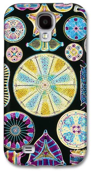 Plankton Galaxy S4 Cases - Art Of Diatom Algae (from Ernst Haeckel) Galaxy S4 Case by Mehau Kulyk