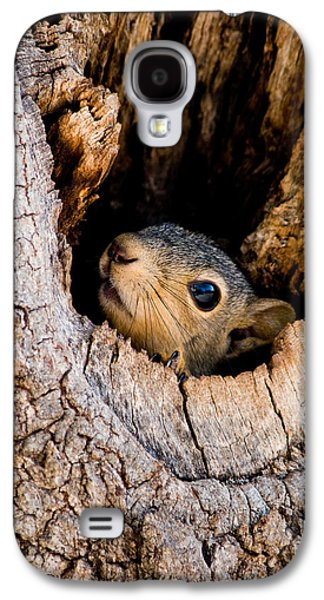 Fox Squirrel Galaxy S4 Cases - Baby Squirrel in Nest Galaxy S4 Case by Betty LaRue