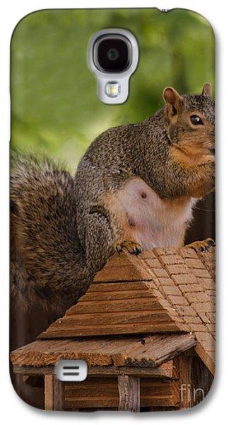 Fox Squirrel Galaxy S4 Cases - Back Yard Pet Galaxy S4 Case by Robert Bales