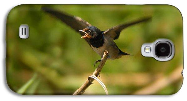 Hirundo Rustica Galaxy S4 Cases - Barn Swallow  Galaxy S4 Case by Perry Van Munster