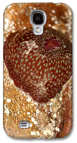 Plankton Galaxy S4 Cases - Beadlet Anemone Galaxy S4 Case by Dr Keith Wheeler