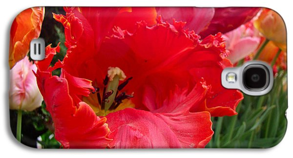 Phillie Galaxy S4 Cases - Beautiful From Inside and Out - Parrot Tulips in Philadelphia Galaxy S4 Case by Mother Nature