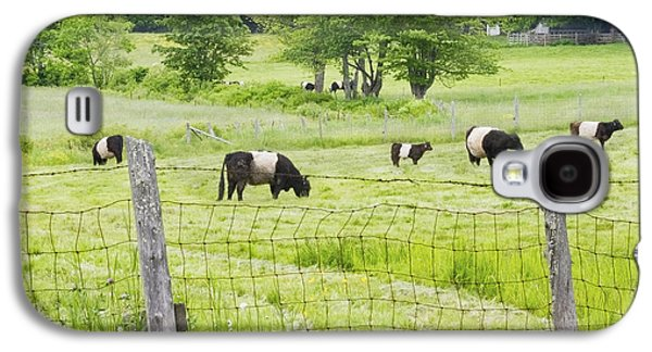 Maine Farms Galaxy S4 Cases - Belted Galloway Cows On  Farm Rockport Maine Photo Galaxy S4 Case by Keith Webber Jr