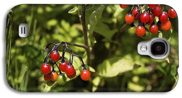Bittersweet Galaxy S4 Cases - Bittersweet Berries (solanum Dulcamara) Galaxy S4 Case by Dr Keith Wheeler