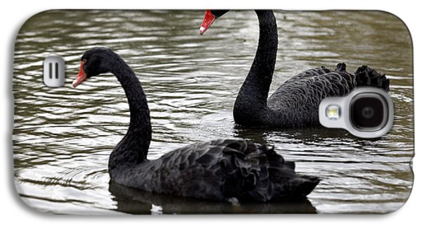 Swan Pair Galaxy S4 Cases - Black Swans Galaxy S4 Case by Denise Swanson