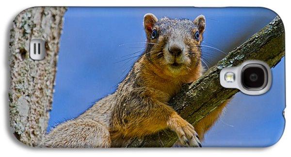 Fox Squirrel Galaxy S4 Cases - Blue Eyes Galaxy S4 Case by Betsy A  Cutler