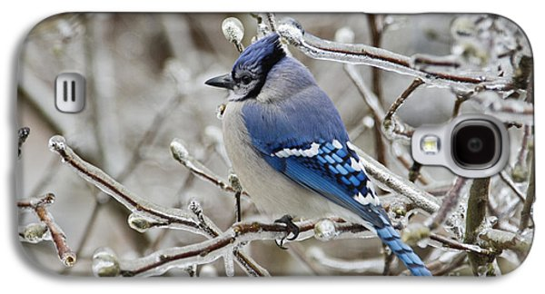 Indiana Winters Galaxy S4 Cases - Blue Jay - D003568 Galaxy S4 Case by Daniel Dempster