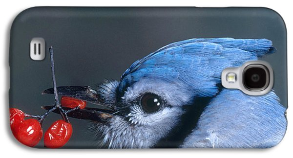 Bittersweet Galaxy S4 Cases - Blue Jay Galaxy S4 Case by Photo Researchers, Inc.