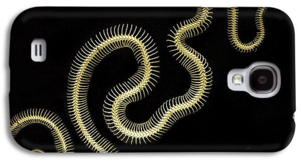 Boa Constrictor Skeleton Galaxy S4 Case by Bob Christopher