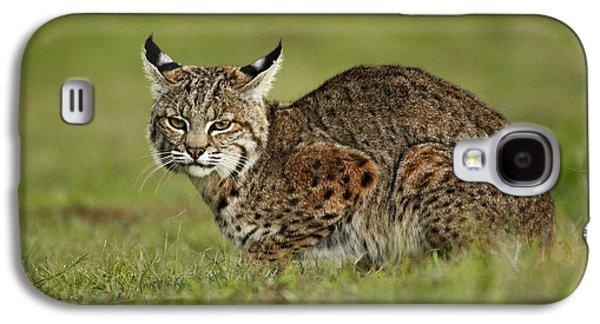 Lynx Rufus Galaxy S4 Cases - Bobcat Juvenile Santa Cruz California Galaxy S4 Case by Sebastian Kennerknecht