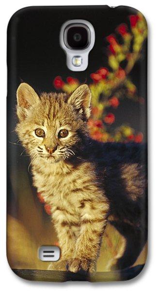 Lynx Rufus Galaxy S4 Cases - Bobcat Kitten Standing On Log North Galaxy S4 Case by Tim Fitzharris