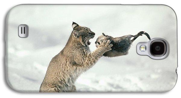 Lynx Rufus Galaxy S4 Cases - Bobcat Lynx Rufus Capturing Muskrat Galaxy S4 Case by Michael Quinton