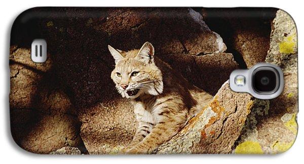 Lynx Rufus Galaxy S4 Cases - Bobcat Lynx Rufus Portrait On Rock Galaxy S4 Case by Gerry Ellis