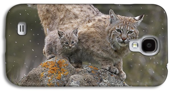 Lynx Rufus Galaxy S4 Cases - Bobcat Mother And Kitten In Snowfall Galaxy S4 Case by Tim Fitzharris