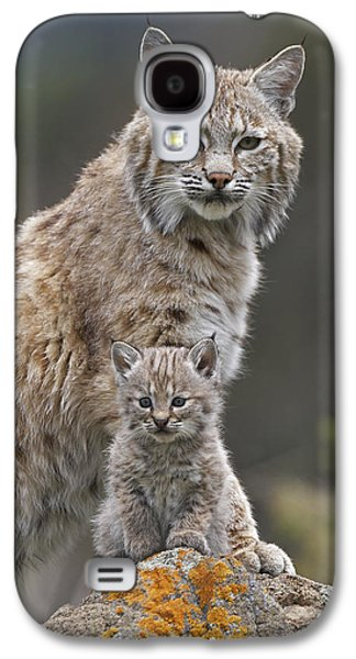 Lynx Rufus Galaxy S4 Cases - Bobcat Mother And Kitten North America Galaxy S4 Case by Tim Fitzharris