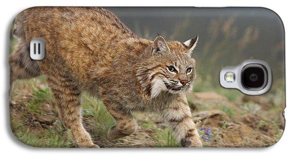 Lynx Rufus Galaxy S4 Cases - Bobcat Stalking North America Galaxy S4 Case by Tim Fitzharris