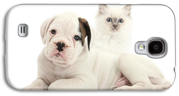 Boxer Puppy Galaxy S4 Cases - Boxer Puppy And Blue-point Kitten Galaxy S4 Case by Mark Taylor