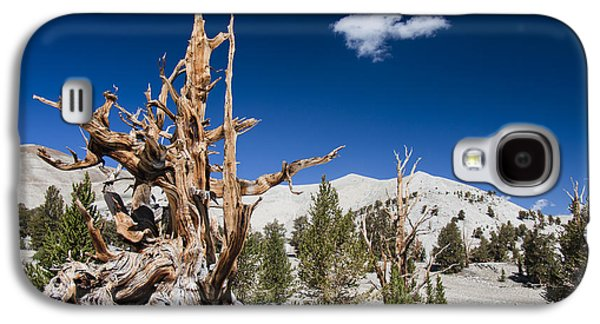 Recently Sold -  - Ancient Galaxy S4 Cases - Bristlecone Pine - Pinus Longaeva Galaxy S4 Case by Olivier Steiner