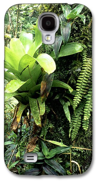 Epiphyte Galaxy S4 Cases - Bromeliad on Tree Trunk El Yunque National Forest Galaxy S4 Case by Thomas R Fletcher