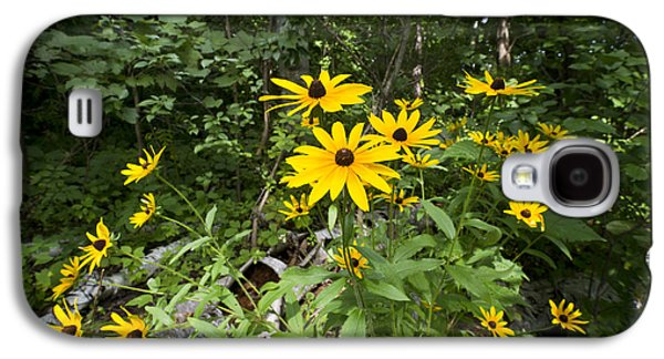 Camelot Galaxy S4 Cases - Brown-eyed Susan in the woods Galaxy S4 Case by Gary Eason