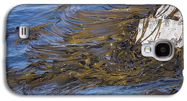 Algal Galaxy S4 Cases - Bull Kelp Bed Galaxy S4 Case by Bob Gibbons