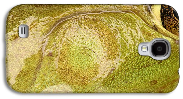 Anurans Galaxy S4 Cases - Bullfrog Ear Galaxy S4 Case by Ted Kinsman