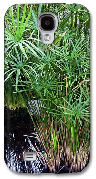 Papyrus Galaxy S4 Cases - Bulrush (cyperus Papyrus) Galaxy S4 Case by Sheila Terry