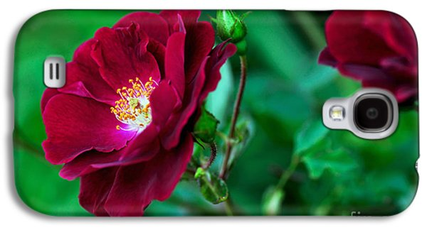 Floribunda Galaxy S4 Cases - Burgundy Iceberg Rose Galaxy S4 Case by Kaye Menner