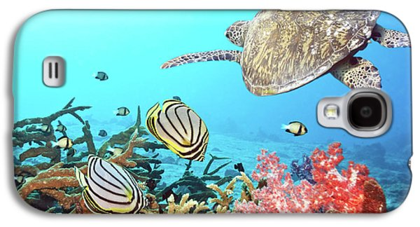 Tropical Oceans Galaxy S4 Cases - Butterflyfishes and turtle Galaxy S4 Case by MotHaiBaPhoto Prints