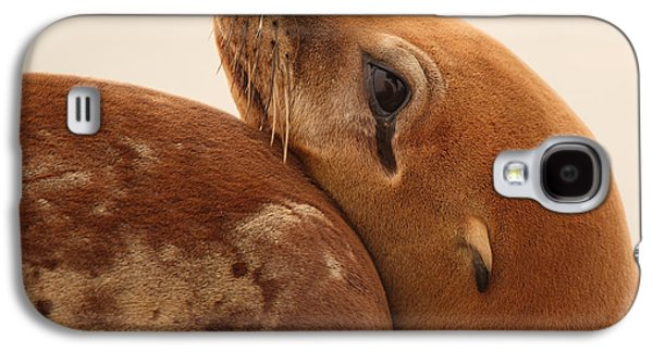 California Sea Lions Galaxy S4 Cases - California Sea Lion Pup Resting Against Mother Galaxy S4 Case by Max Allen