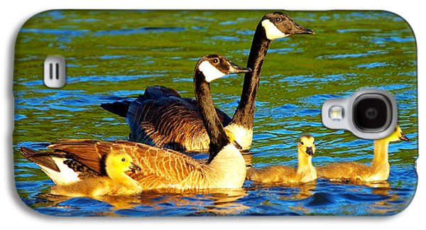 Canada Geese Family Galaxy S4 Case by Paul Ge