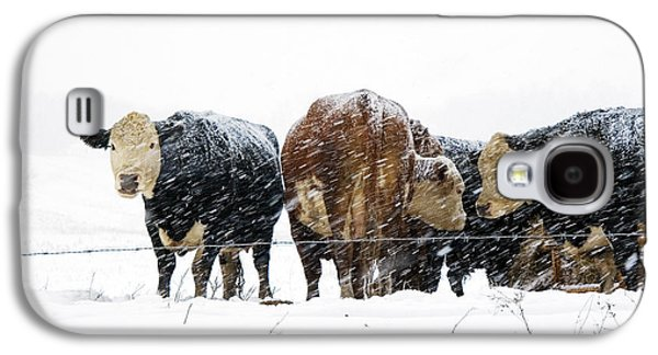 Cattle In A Snowstorm In Southwest Michigan Galaxy S4 Case by Randall Nyhof