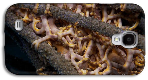 Galaxy S4 Cases - Close-up View Of Basket Stars Feeding Galaxy S4 Case by Terry Moore