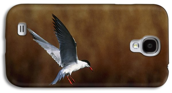 Hirundo Galaxy S4 Cases - Common Tern Flying Galaxy S4 Case by Andy Harmer